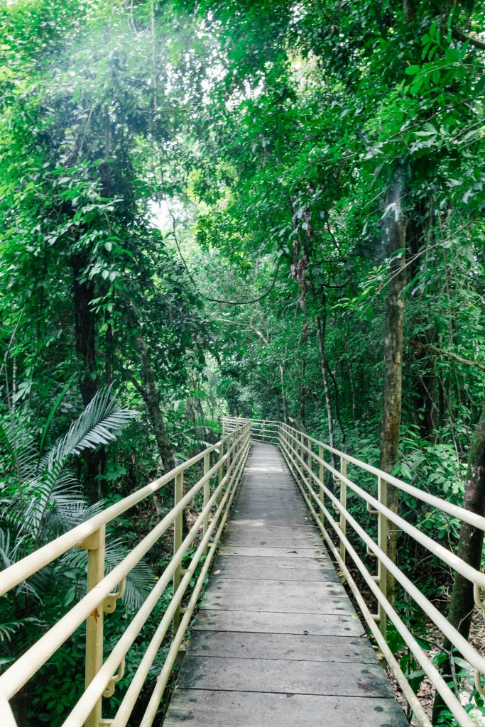 The trail into Manuel Antonio National Park where you can see wildlife including sloths.