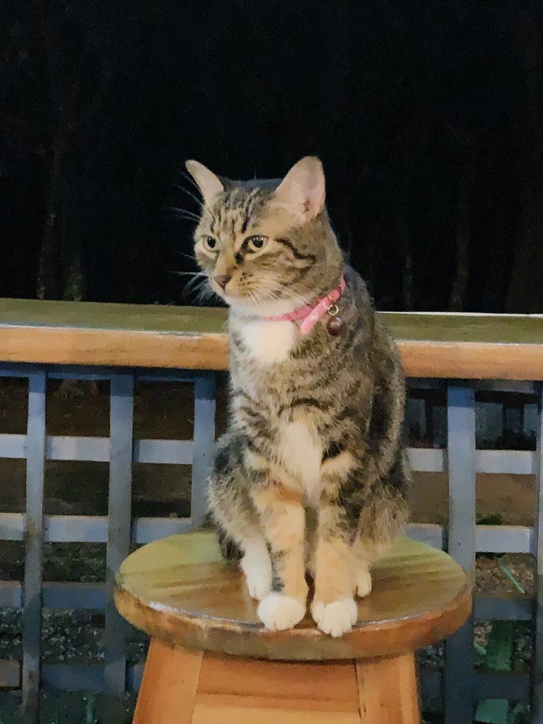 Cat friend at a local restaurant