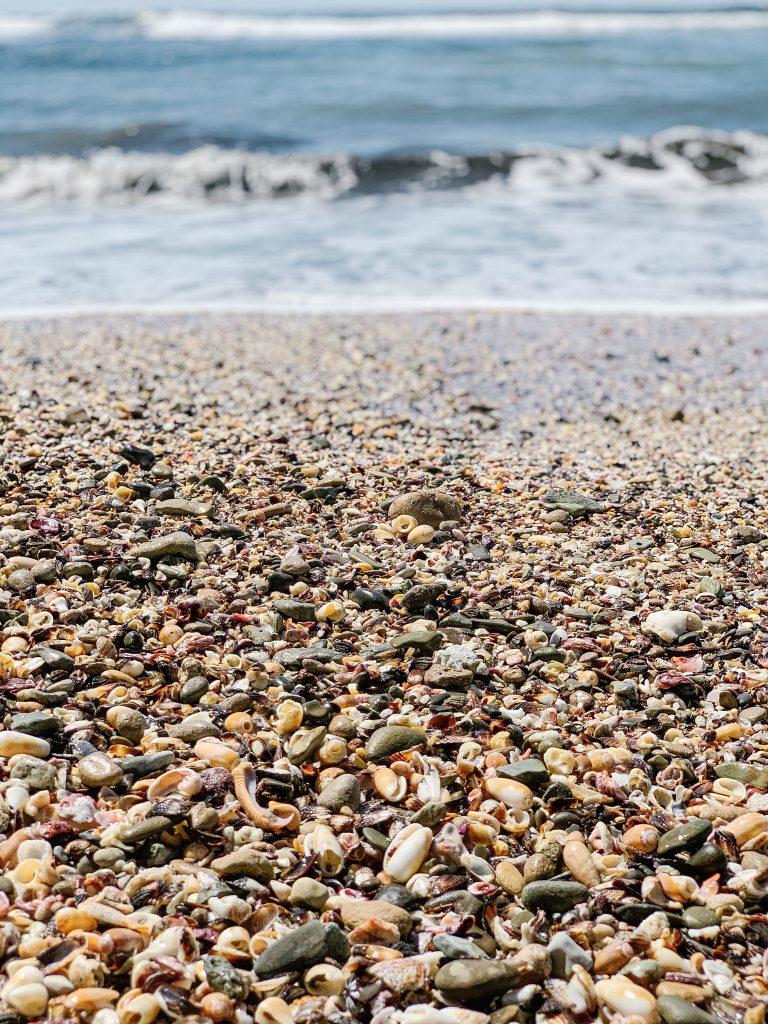 Nosara beach with seashells