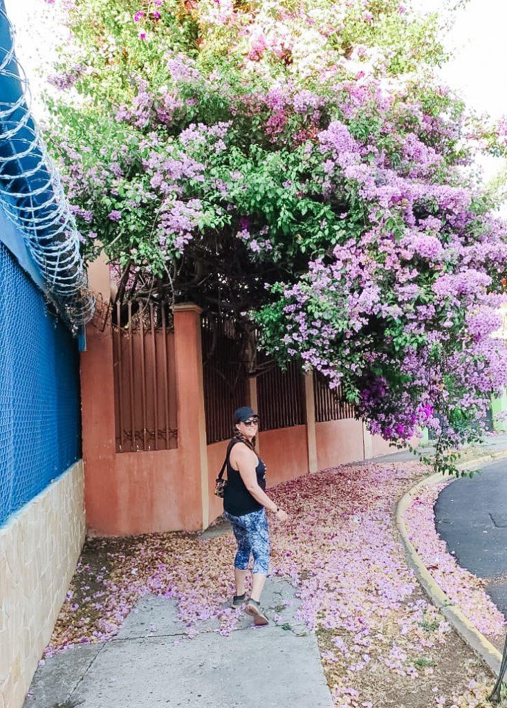 flowers on a sidewalk in san jose
