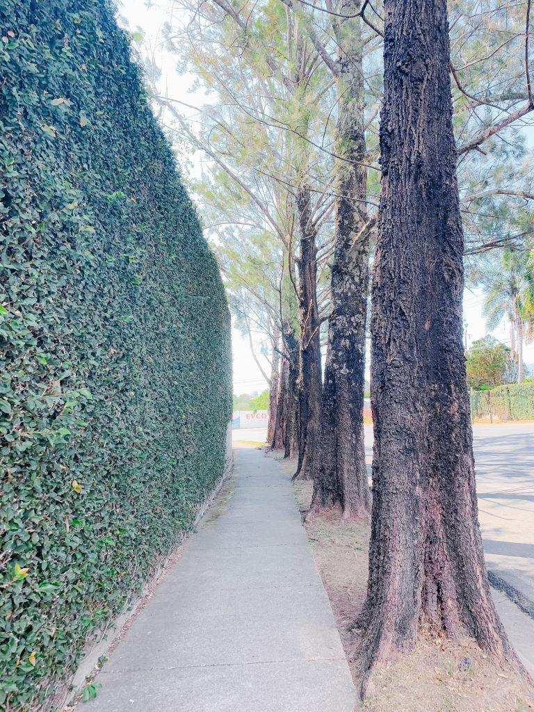 green vine wall sidewalk