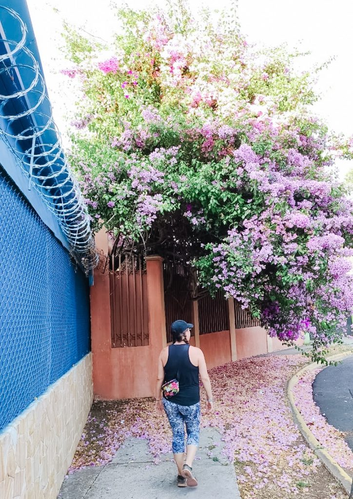 walking under flower trees