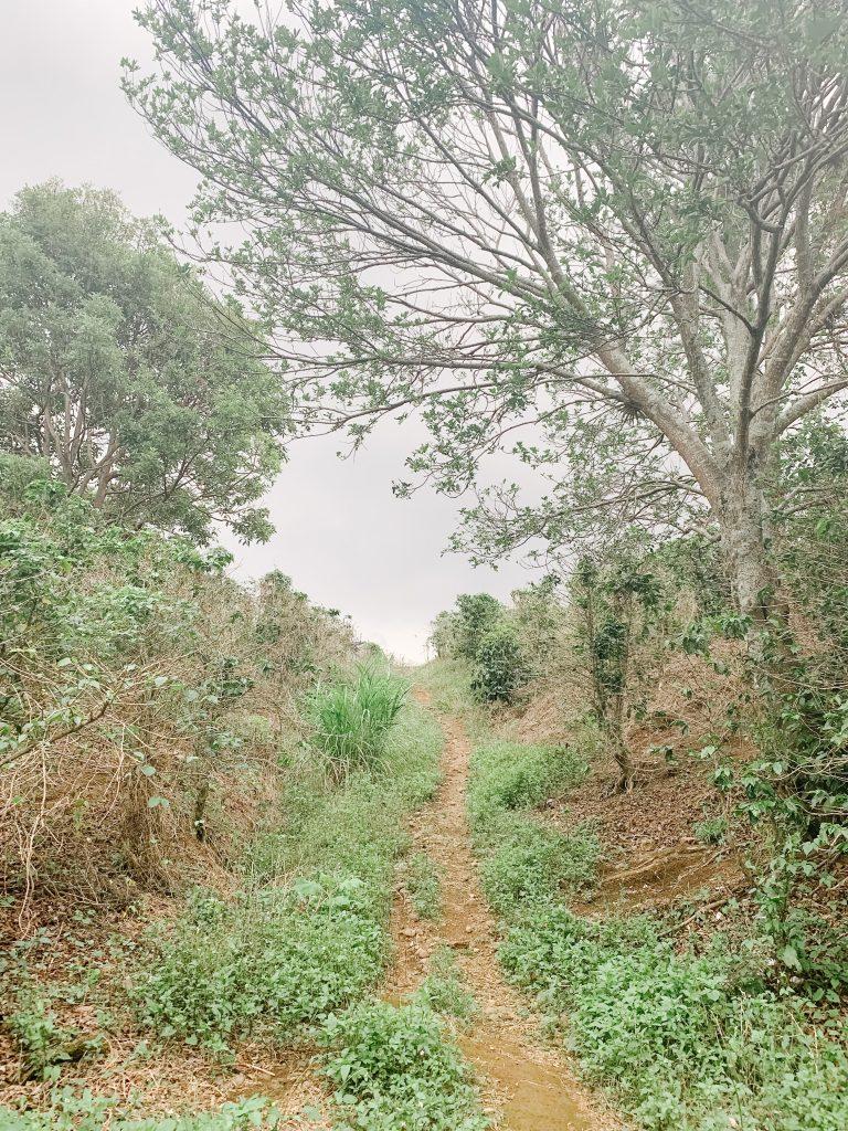 trail into a coffee farm